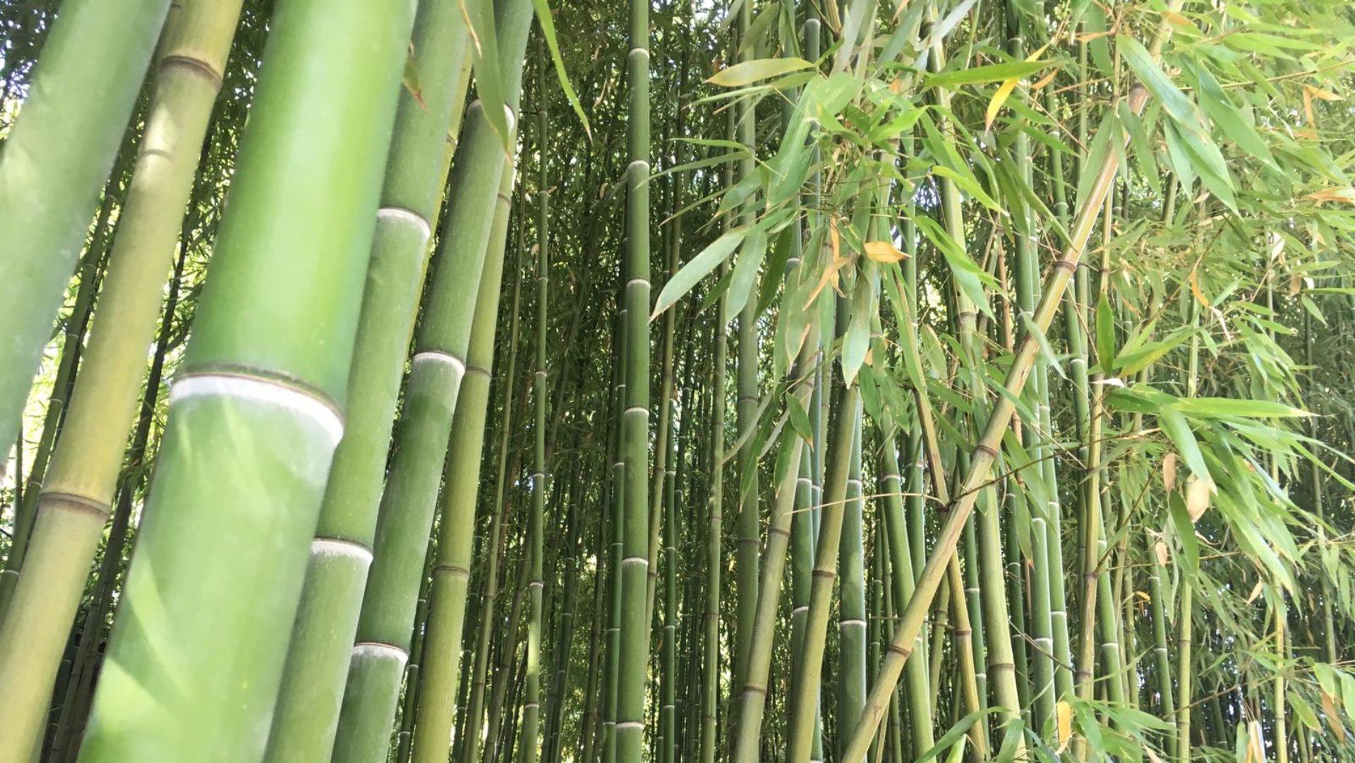 La Pause Bambou